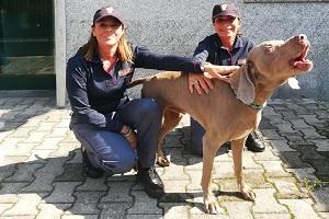 liberano cane rapito