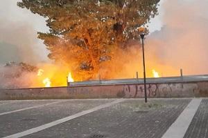 Incendio al parco Ticinello. Forza Italia: possibile dolo 1