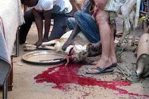 De Corato (FdI): Sala tutela gli animali concedendo l'ex Palatrussardi per la festa del sacrificio