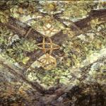 Riapertura temporanea del Castello Sforzesco