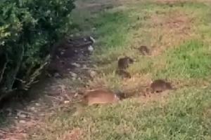 Sardone (Lega): topi nei giardinetti di Piazza San Babila