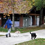 Partono i corsi per il Patentino cane speciale