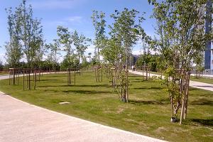 Superati i 500.000 alberi. In arrivo 114.000 piante nella Città metropolitana