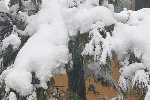 milano s'imbianca di neve