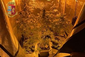 Scoperta serra di marijuana casalinga