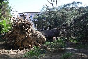 De Corato (FdI): dopo 5 anni Sala si accorge che il verde va manutenuto