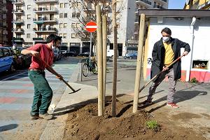 Piantati otto liriodendri in piazzale Ferrara