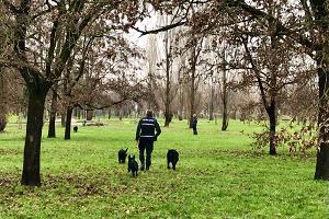 Oltre 70 cani addestrati dalla scuola del nucleo cinofili