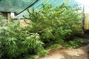 Otto arresti per traffico internazionale di droga