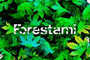 Forestami: raggiunto il traguardo dei 300.000 alberi piantati
