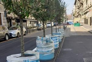 """Piazzale Bacone, De Corato: """"Ennesima trovata di Sala: alberelli destinati a seccarsi"""""""